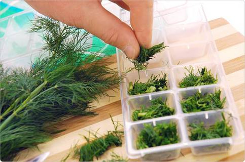 Erbe aromatiche: congelate, fresche o essiccate