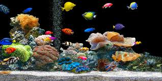 Come allestire un acquario in salotto