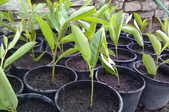 Come raccogliere e piantare arbusti