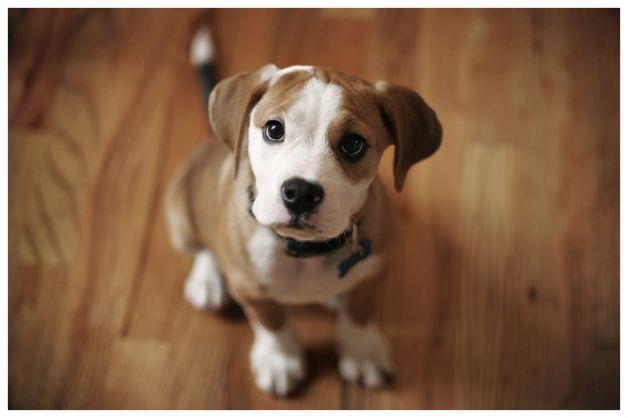 Come tenere un cane in appartamento