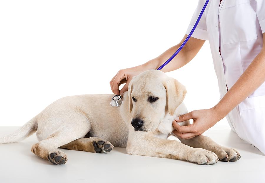 scegliere il veterinario