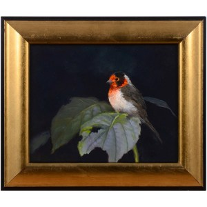 Red Faced Warbler