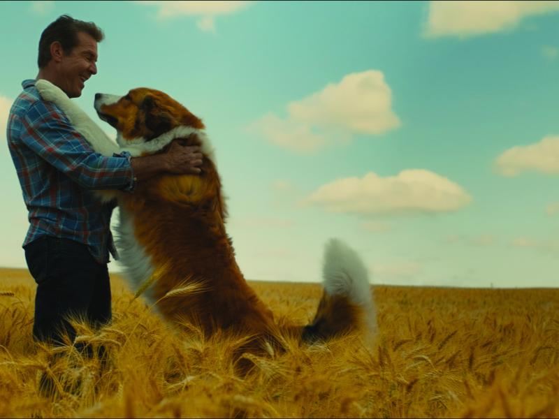 (from left) – Ethan (Dennis Quaid) and Bailey as Buddy, a Great Pyrenees Bernese Mountain Dog (voiced by Josh Gad), in A Dog's Journey, directed by Gail Mancuso.