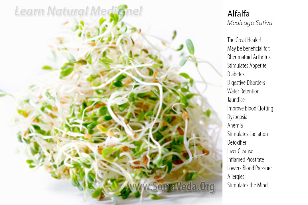Alfalfa Natural Medicine by Anthony B. James