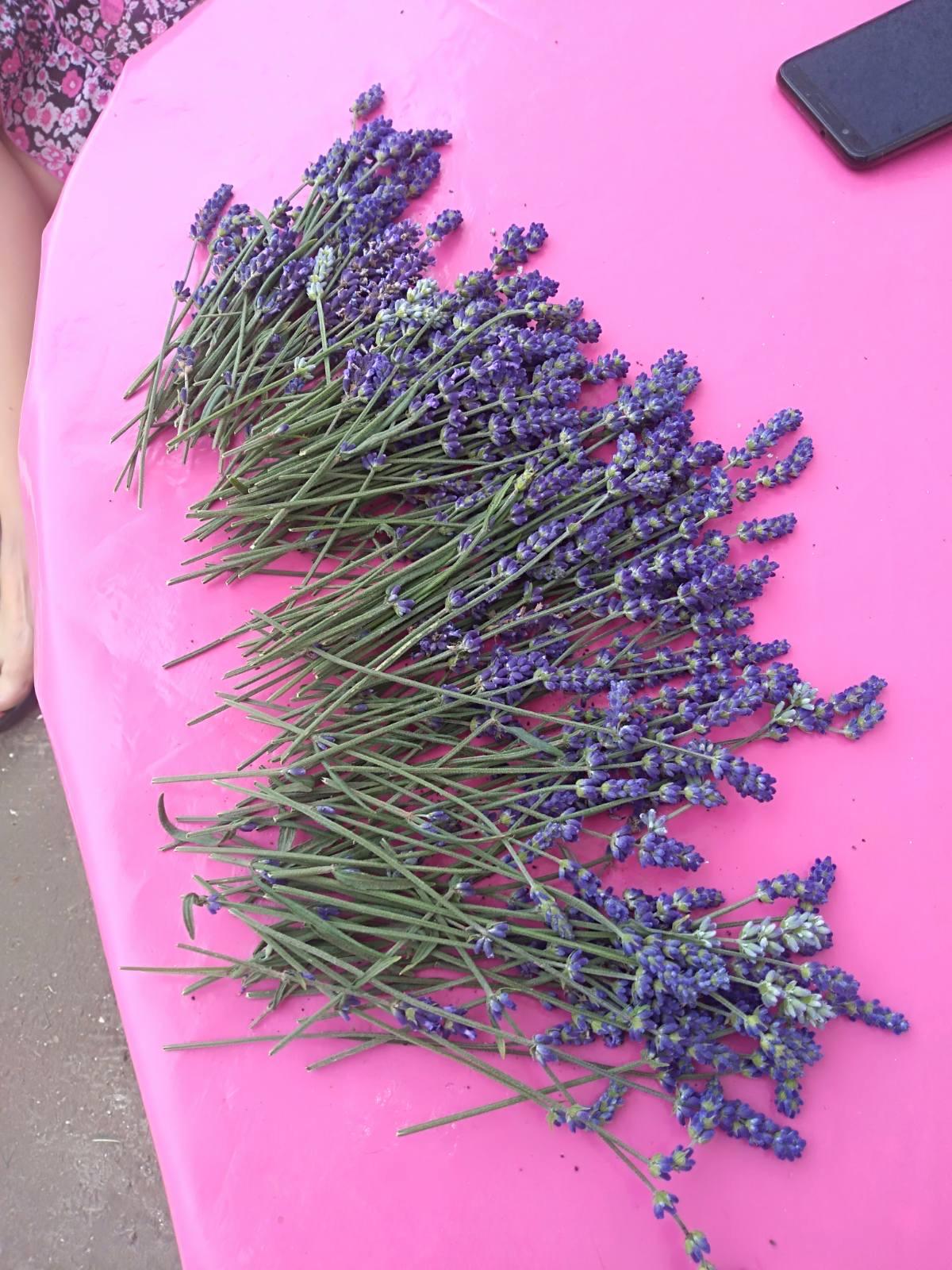 Убрано цвеће лаванде