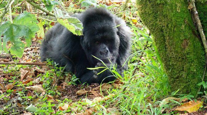 Uganda – The Pearl of Africa