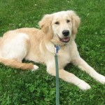 Therapist Dog – How My Puppy Teaches Me To Be Less Neurotic