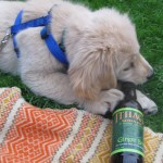 Honey's 11 Favorite Dog Toys (That Aren't Dog Toys)