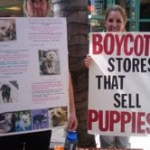 Puppy Mills are Bad Capitalism – Blog the Change for Animals