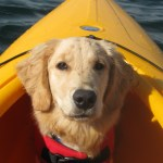What Would You Do If Your Dog Was Lost Overboard?