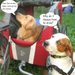 Dogs Go For Ice Cream – Wordless Wednesday
