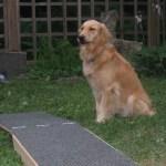 Best Online Dog Training Resources