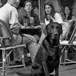 Living with Dogs – Taste the Bitter and the Sweet