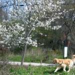5 Reasons I Train My Dog