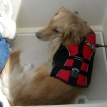 Sailing with Dogs – a photo essay