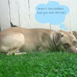 A Day in the Life of a Foster Dog