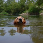 5 Reasons to Teach Your Dog To Swim (and 4 Not To)
