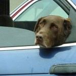 4 Things You Need to Know About People Who Leave Dogs in Hot Cars