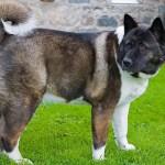 Do Dog Breeds Matter?