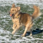 When You Feel Like Dancing, Dance – Good for the Dog; Good for You