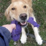Why Do People Resist Hiring Dog Trainers?