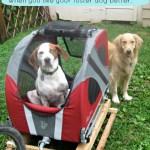 Dog World Problem – Preferring the Foster