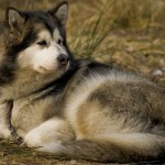 Is It Ok For Dogs To Sleep Outside?