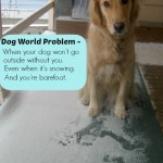 Walking Barefoot in the Snow – A Dog World Problem