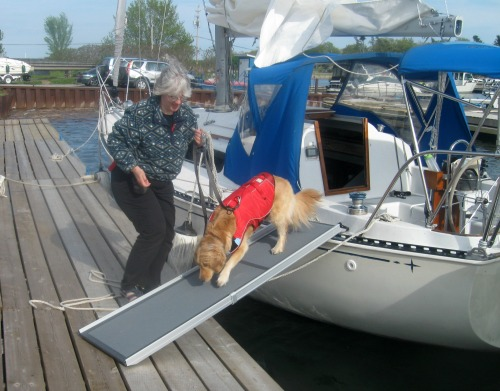 10 reasons every dog needs a life jacket something for Every dog needs a home