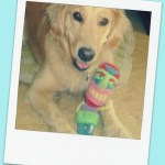 What Are Dog Toy Makers Thinking? – Wordless Wednesday