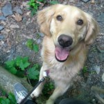 Aha! Moments – 3 Lessons That Made Me a Better Dog Walker