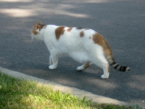 A cat in the neighborhood.