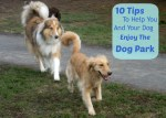10 Tips To Help You Enjoy the Dog Park