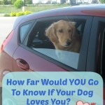 How Far Would You Go To Know If Your Dog Loves You?