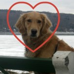 Wondering If Your Dog Loves You? You're Asking The Wrong Question