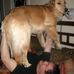 My Dog the Personal Trainer
