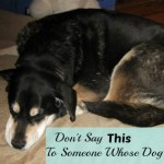 Don't Say This To Someone Whose Dog Is Dying