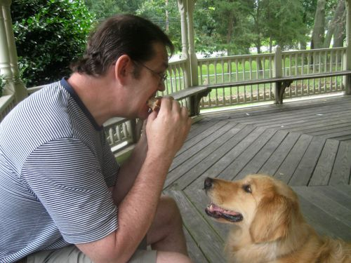 Honey the golden retriever looks at a sandwich with love.
