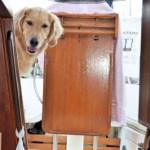 Back To School – Positive Pet Training Hop
