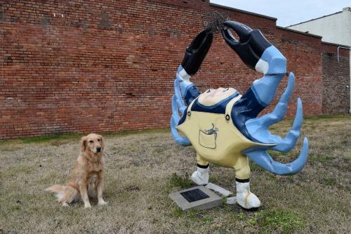 Honey the golden retriever wonders about Crabby.