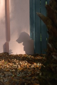 Honey the golden retriever hides behind a tree with only her shadow showing.