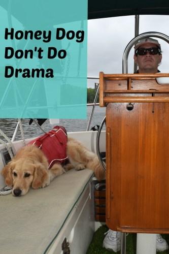 Honey the golden retriever don't do boat drama.