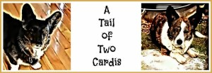 A Tail of Two Cardis blog header.