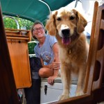 Honey the golden retriever in the cockpit with Taryn from Tails of Two Cardis.