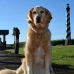 One Big Secret To Make You A Successful Dog Trainer