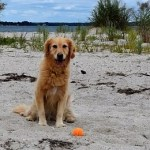 Doesn't Every Dog Deserve Her Own Beach?
