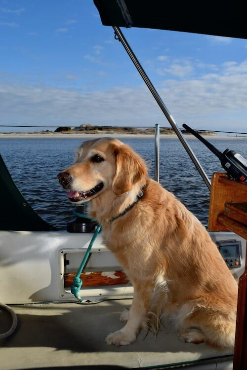 Honey the boat dog wants to go to Little River Inlet beach.