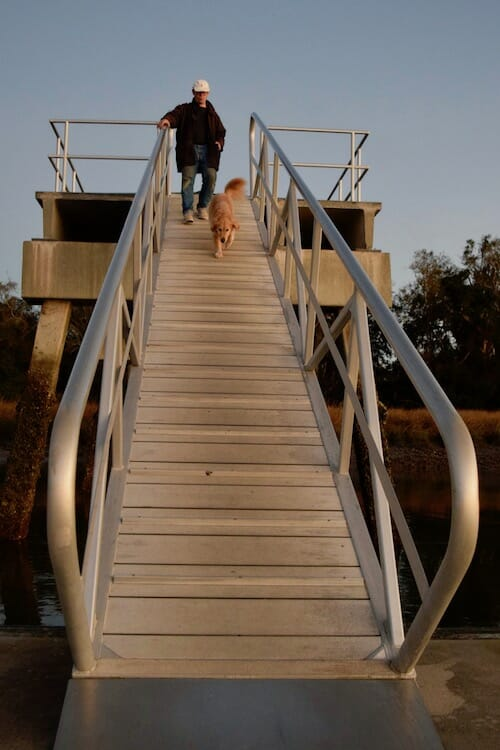 Build your dog's confidence (Golden retriever and man walk down steep metal ramp)