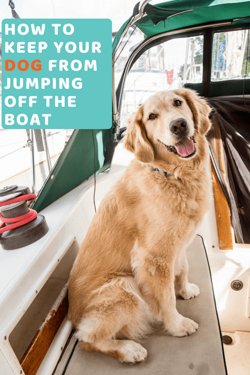 How to keep my golden retriever dog from jumping off the boat.