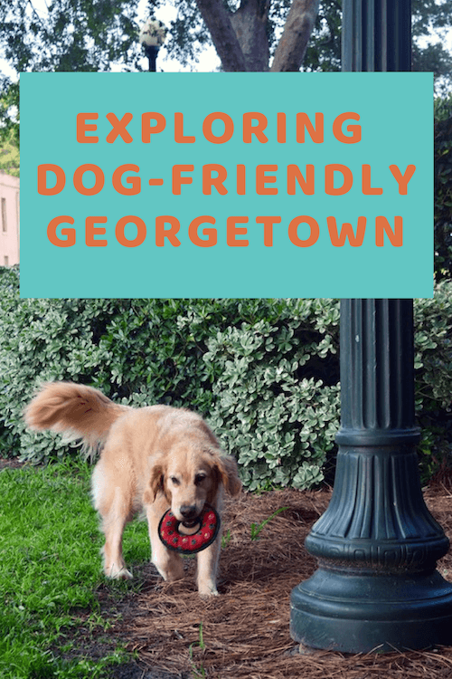 Honey the golden retrievers finds Georgetown South Carolina both charming and dog-friendly.